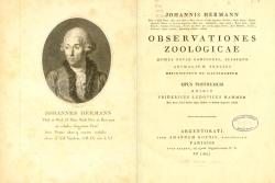 Hermann 1804