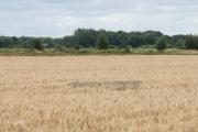 De beschermkooi rond het nest tussen de baardtarwe