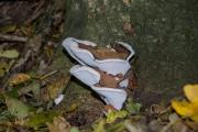 Dikrandtonderzwam (Ganoderma adspersum)